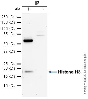 Immunoprecipitation - Anti-Histone H3 antibody (ab18521)
