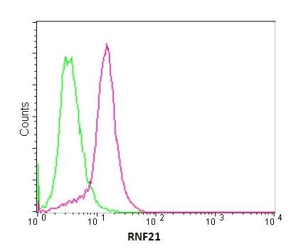Flow Cytometry - Anti-RNF21/IFP1 antibody [EPR11305(2)] (ab180130)
