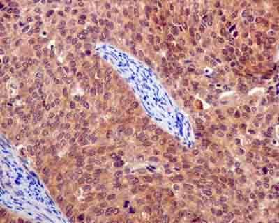 Immunohistochemistry (Formalin/PFA-fixed paraffin-embedded sections) - Anti-EID1 antibody [EPR13636] (ab180133)