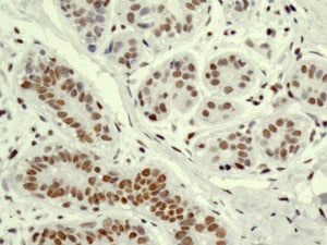 Immunohistochemistry (Formalin/PFA-fixed paraffin-embedded sections) - Anti-XAB2 antibody [EPR8971] (ab180181)