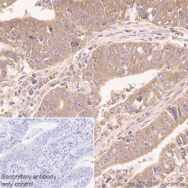 Immunohistochemistry (Formalin/PFA-fixed paraffin-embedded sections) - Anti-RAB11-FIP2 antibody [EPR12294-85] (ab180504)