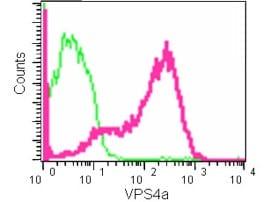 Flow Cytometry - Anti-VPS4a antibody [EPR14545(B)] (ab180581)