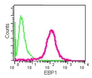 Flow Cytometry - Anti-EBP1 antibody [EPR14569(B)] (ab180602)