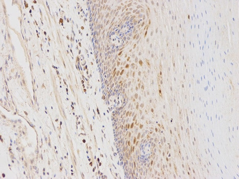 Immunohistochemistry (Formalin/PFA-fixed paraffin-embedded sections) - Anti-GSTA1 antibody (ab180650)