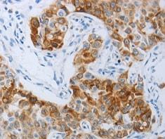 Immunohistochemistry (Formalin/PFA-fixed paraffin-embedded sections) - Anti-P2Y4 antibody (ab180718)