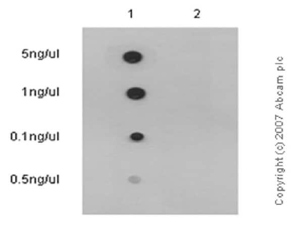 Dot Blot - Anti-Nrf2 (phospho S40) antibody [EP1809Y] - BSA and Azide free (ab180844)