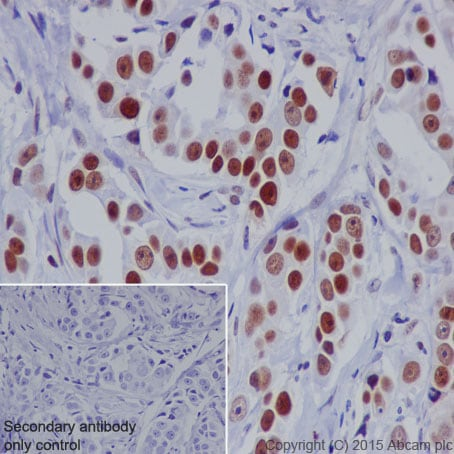 Immunohistochemistry (Formalin/PFA-fixed paraffin-embedded sections) - Anti-Nrf2 (phospho S40) antibody [EP1809Y] - BSA and Azide free (ab180844)