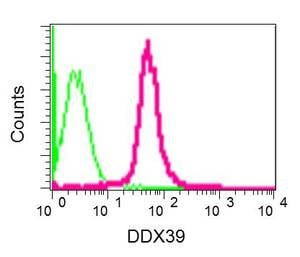 Flow Cytometry - Anti-DDX39 antibody [EPR13508] (ab180857)