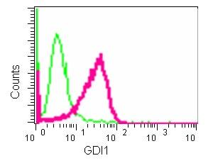 Flow Cytometry - Anti-GDI1 antibody [EPR13195] (ab181213)