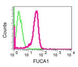Flow Cytometry - Anti-FUCA1 antibody [EPR12498] (ab181357)