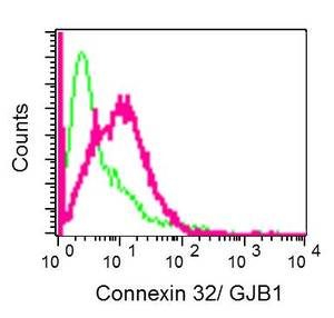 Flow Cytometry - Anti-Connexin 32 / GJB1 antibody [EPR8036(2)] (ab181374)