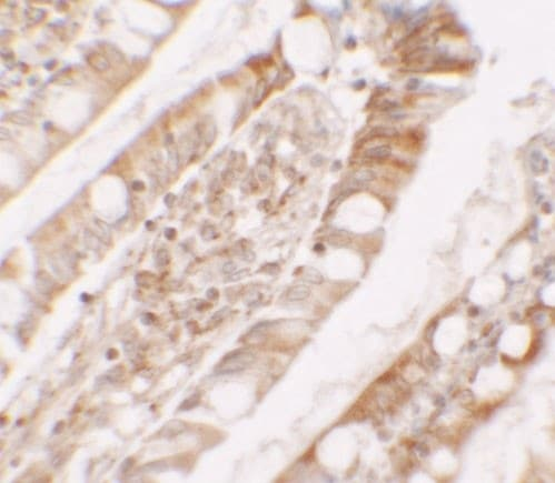 Immunohistochemistry (Formalin/PFA-fixed paraffin-embedded sections) - Anti-Lipin 1 antibody (ab181389)