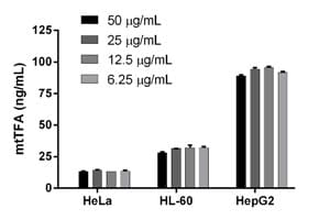 Comparison of mtTFA protein levels in 3 Human cell lines.