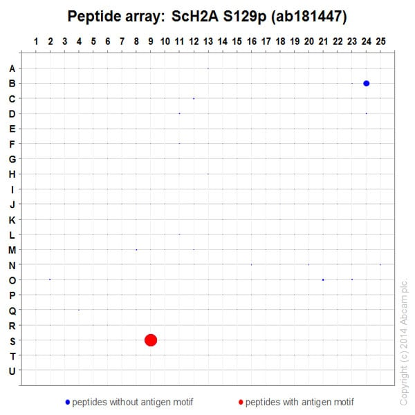 Peptide Array - Anti-Histone H2A (phospho S129) antibody [EPR17588] - ChIP Grade (ab181447)