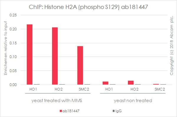 ChIP - Anti-Histone H2A (phospho S129) antibody [EPR17588] - ChIP Grade (ab181447)