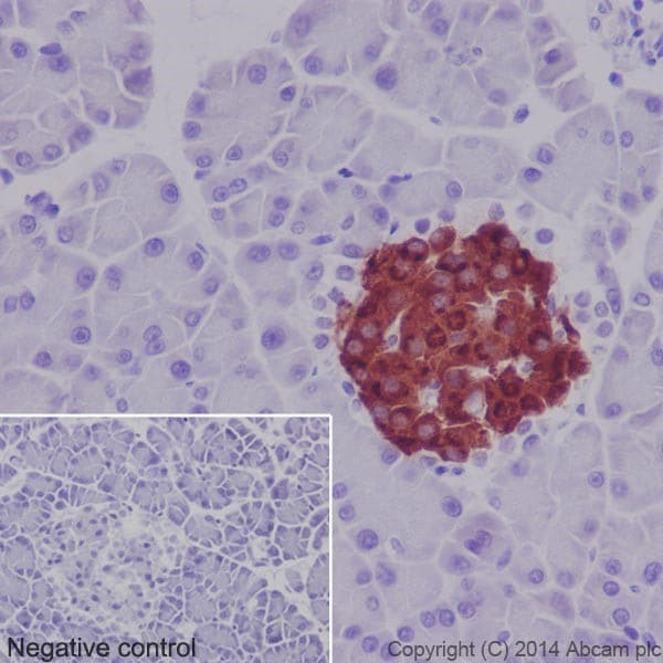 Immunohistochemistry (Formalin/PFA-fixed paraffin-embedded sections) - Anti-Insulin antibody [EPR17359] (ab181547)