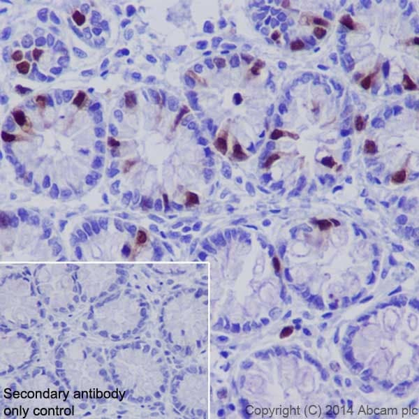 Immunohistochemistry (Formalin/PFA-fixed paraffin-embedded sections) - Anti-Cyclin A2 antibody [EPR17351] (ab181591)