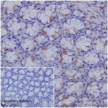 Immunohistochemistry (Formalin/PFA-fixed paraffin-embedded sections) - Anti-Cyclin B1 antibody [EPR17060] (ab181593)