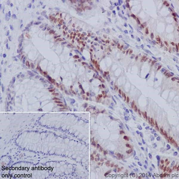 Immunohistochemistry (Formalin/PFA-fixed paraffin-embedded sections) - Anti-HNF-4-alpha antibody [EPR16885] - ChIP Grade (ab181604)