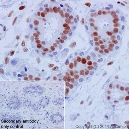 Immunohistochemistry (Formalin/PFA-fixed paraffin-embedded sections) - Anti-JunD antibody [EPR17365] (ab181615)