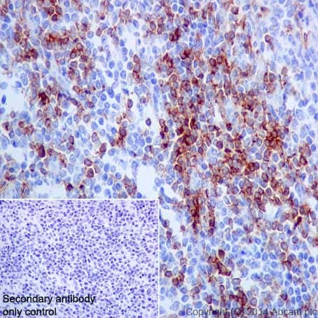 Immunohistochemistry (Formalin/PFA-fixed paraffin-embedded sections) - Anti-CD4 antibody [EPR6855] - BSA and Azide free (ab181724)