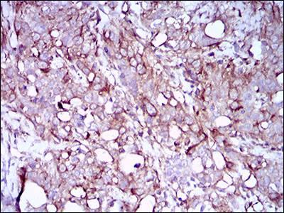 Immunohistochemistry (Formalin/PFA-fixed paraffin-embedded sections) - Anti-SCP3 antibody [6F9C5] (ab181746)