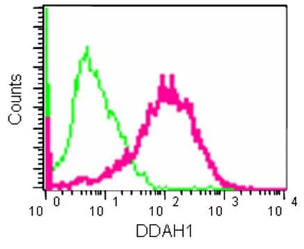 Flow Cytometry - Anti-DDAH1 antibody [EPR13921] (ab181859)