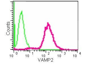 Flow Cytometry - Anti-VAMP2 antibody [EPR12790] (ab181869)