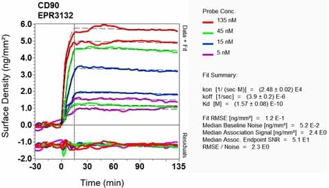 Other - Anti-CD90 / Thy1 antibody [EPR3132] - BSA and Azide free (ab181885)