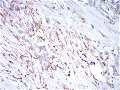 Immunohistochemistry (Formalin/PFA-fixed paraffin-embedded sections) - Anti-CD14 antibody [4B4F12] (ab182032)