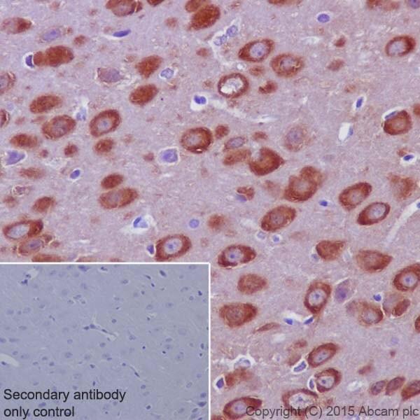 Immunohistochemistry (Formalin/PFA-fixed paraffin-embedded sections) - Anti-Phospholipase C beta 1/PLCB1 antibody [EPR18895] (ab182368)