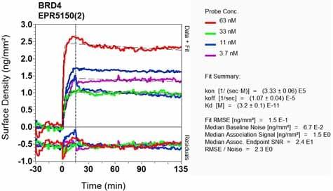 Other - Anti-Brd4 antibody [EPR5150(2)] - BSA and Azide free (ab182446)