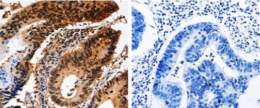 Immunohistochemistry (Formalin/PFA-fixed paraffin-embedded sections) - Anti-14-3-3 epsilon antibody (ab182656)