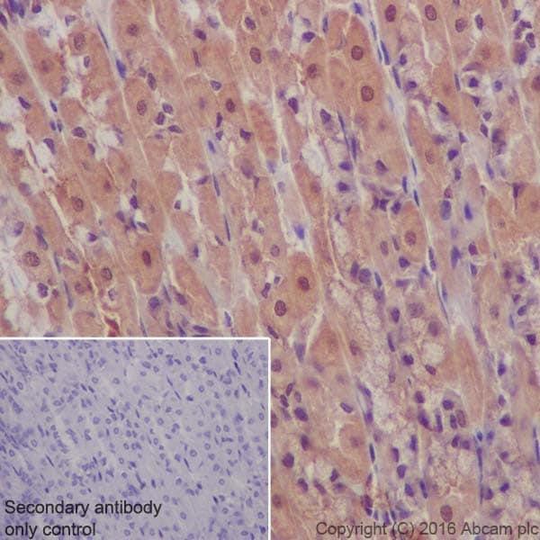 Immunohistochemistry (Formalin/PFA-fixed paraffin-embedded sections) - Anti-AKT1 + AKT2 antibody [EPR17062] (ab182729)