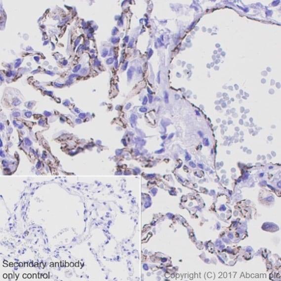 Immunohistochemistry (Formalin/PFA-fixed paraffin-embedded sections) - Anti-CD31 antibody [EPR17259] (ab182981)