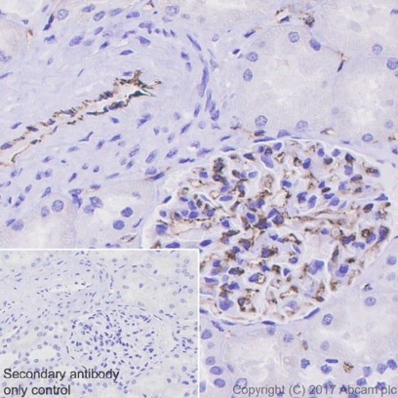 Immunohistochemistry (Formalin/PFA-fixed paraffin-embedded sections) - Anti-CD31 antibody [EPR17259] (ab182981)
