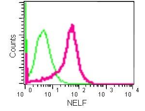 Flow Cytometry - Anti-NELF antibody [EPR8976(2)] (ab183022)