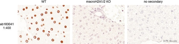 Immunohistochemistry (Formalin/PFA-fixed paraffin-embedded sections) - Anti-mH2A1 antibody [EPR9359(2)] (ab183041)