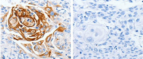 Immunohistochemistry (Formalin/PFA-fixed paraffin-embedded sections) - Anti-LPA-4 antibody (ab183076)