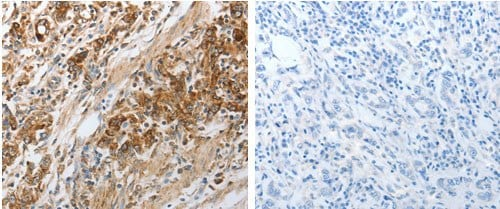 Immunohistochemistry (Formalin/PFA-fixed paraffin-embedded sections) - Anti-NPY1R antibody - C-terminal (ab183108)