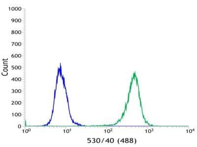 Flow Cytometry - Anti-MAGEA1 antibody [SP194] - C-terminal (ab183309)