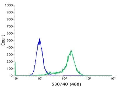 Flow Cytometry - Anti-C19orf2 antibody [SP215] - C-terminal (ab183310)
