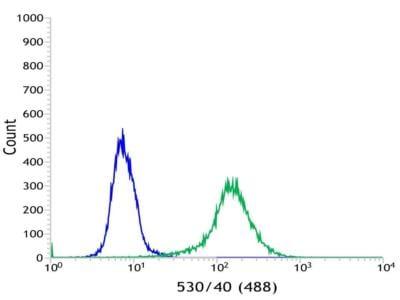 Flow Cytometry - Anti-VPAC1 antibody [SP234] (ab183312)