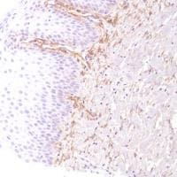 Immunohistochemistry (Formalin/PFA-fixed paraffin-embedded sections) - Anti-CD13 antibody [SP182] (ab183358)