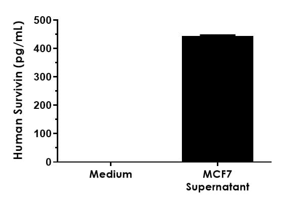 Comparison of Survivin concentrations in media and MCF7 cell supernatants.