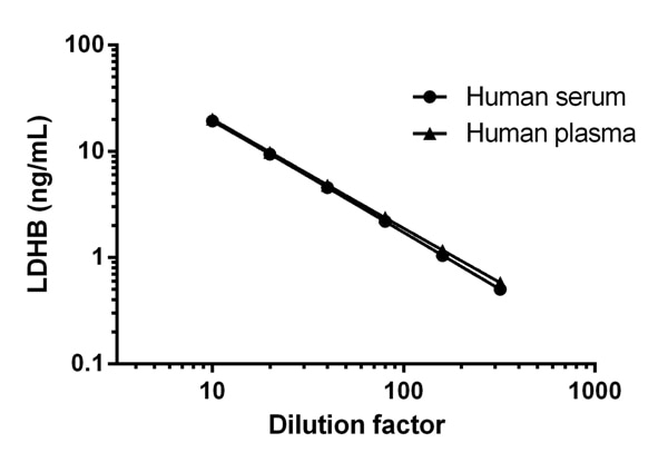 Interpolated concentrations of LDHB in Human serum and plasma titrations