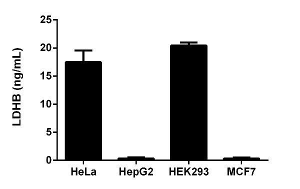 Quantitation of LDHB expression in different cell lines