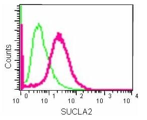 Flow Cytometry (Intracellular) - Anti-SUCLA2 antibody [EPR14925] (ab183513)