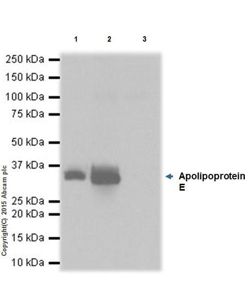 Immunoprecipitation - Anti-Apolipoprotein E antibody [EPR19378] (ab183596)