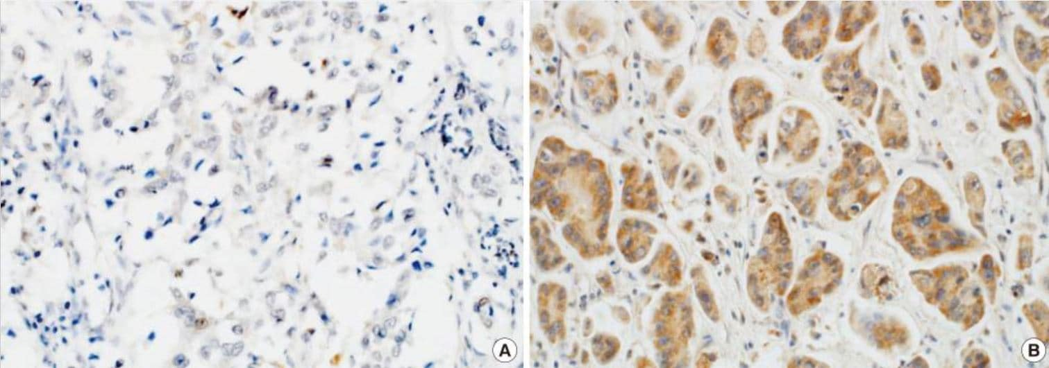 Immunohistochemistry (Formalin/PFA-fixed paraffin-embedded sections) - Anti-Wnt7a antibody (ab183653)